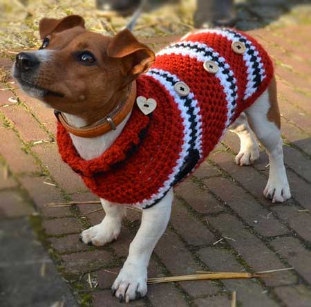 Even dogs like fresh, clean sweaters!